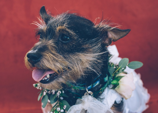 Loving this darling photo of the Flower Girl pup at this gorgeous wedding!